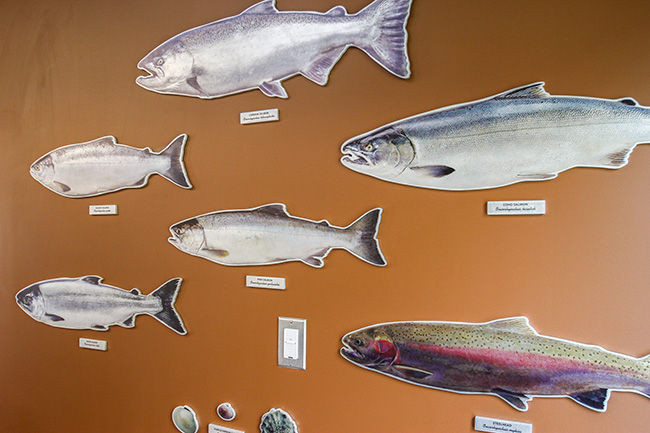 Perry Center Interpretive and Donor Recognition Signage - Mounted Fish Illustrations